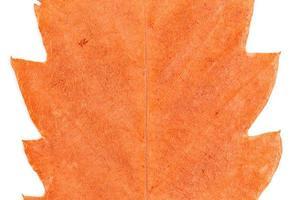 sfondo foglia d & # 39; autunno dorato foto
