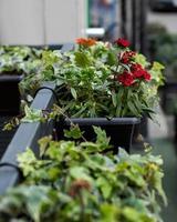 ristorante con terrazza all'aperto con piante di fiori rossi foto