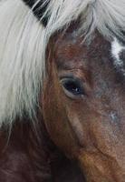 bellissimo ritratto di cavallo marrone nel prato foto