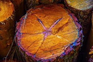 tronco di un pino foto