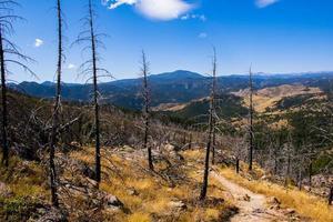 percorso tra gli alberi devastati da un incendio boschivo nel parco chautauqua a boulder, colorado foto