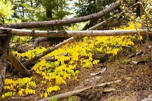 foresta nel parco chautauqua a boulder, colorado foto