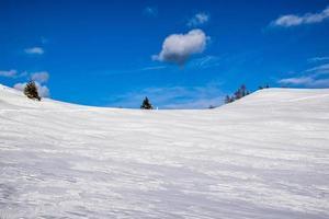 pini e neve vicino alla cima larici sull'altopiano di asiago, vicenza, italia foto