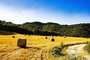 campo giallo con balle di fieno maturo in una soleggiata giornata estiva foto