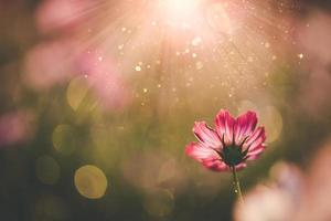fiori dell'universo bellissimi foto