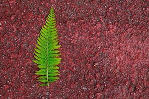 foglia di felce verde nella stagione primaverile foto