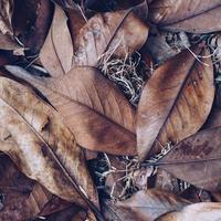 foglie secche marroni nella stagione autunnale foto