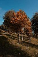 alberi in montagna nella stagione autunnale foto