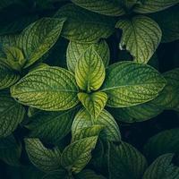 foglie di piante verdi in primavera foto