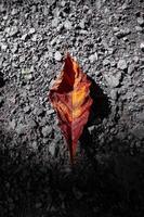 foglia marrone secca sul terreno foto