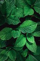 foglie di piante verdi nella natura foto