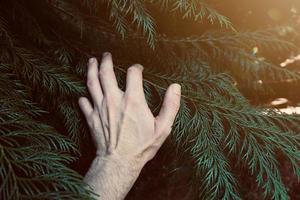 mano che tocca le piante foto