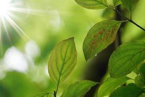 foglie di albero verde sullo sfondo verde della natura foto