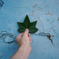 mano con foglie verdi sentendo la natura foto