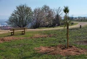 panca in legno vuota nel parco di primavera con un percorso foto