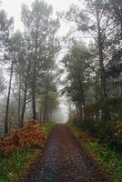 strada con alberi marroni in montagna nella stagione autunnale foto