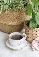 ficus benjamin in un cesto di paglia maranta kerchoveana e una tazza di caffè foto