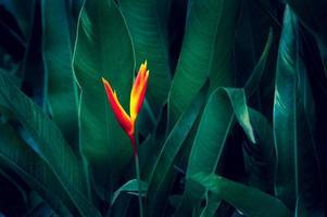 sfondo scuro fogliame verde tropicale foto