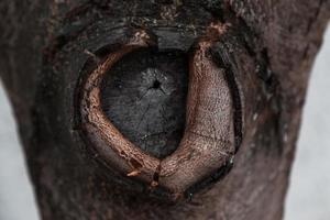 trama della corteccia di albero con un nodo circolare foto