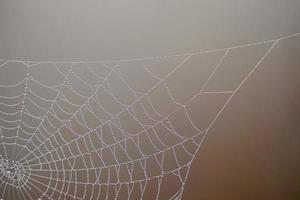 gocce sulla ragnatela nella natura foto