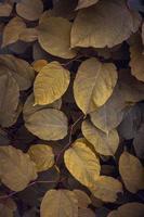 foglie di piante verdi e gialle nella natura foto