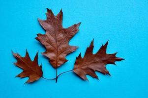 foglie marroni nella stagione autunnale foto