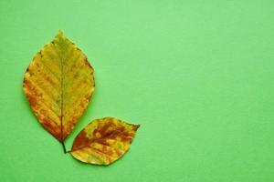 foglie gialle nella stagione autunnale foto