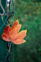 foglia marrone nella stagione autunnale foto