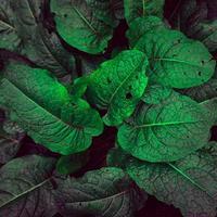 foglie di piante verdi sullo sfondo verde della natura foto