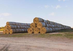 enormi mucchi di paglia di fieno rotolati in balle su un campo raccolto contro un cielo blu foto