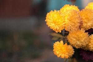 un sacco di bellissimi fiori in giardino con copia spazio per il testo foto