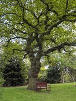 panca di legno sotto una bellissima quercia foto