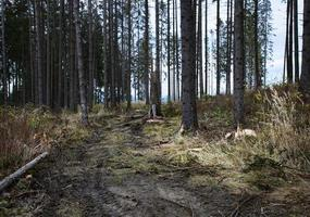 sera d'autunno nella foresta distrutta foto