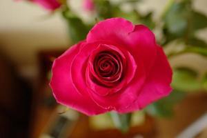 bocciolo di rosa rosa da vicino foto