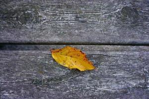 foglia gialla nella stagione autunnale foto
