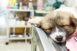 cucciolo di malattia con flebo endovenoso sul tavolo operatorio nella clinica del veterinario foto