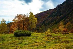 variazione autunnale del colore delle foglie foto