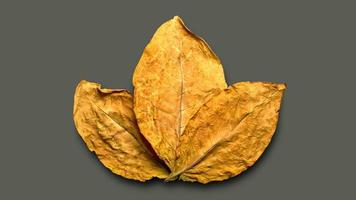 foglie di tabacco secco sullo sfondo foto