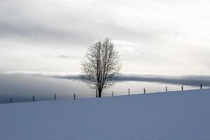 albero solitario nella neve due foto