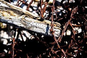 legno e filo spinato foto