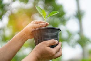 piantare un albero nel concetto di vaso di fiori di salvare la terra e l'ambiente giornata mondiale della terra foto