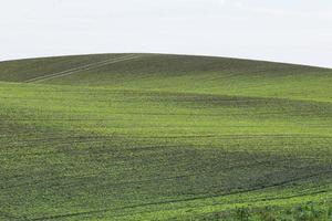 sfondo del campo verde foto