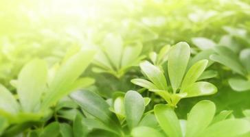sfondo della natura di foglie verdi con la luce del sole nel giardino foto