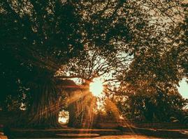 chiarore del sole attraverso i rami dell'albero del cespuglio foto