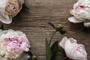 fiori di peonia rosa come un bordo foto