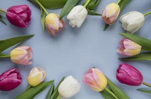 tulipani di primavera su sfondo blu foto