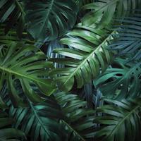 sfondo di foglie tropicali foto