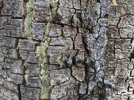 corteccia d'albero texture di sfondo foto