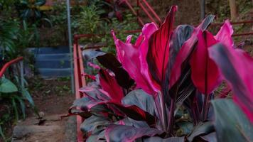 foto di piante selvatiche che crescono rigogliose in una pineta