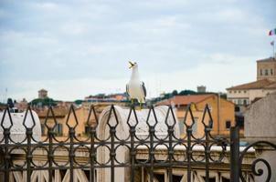 gabbiano sulla prospettiva sopra il centro storico di roma foto